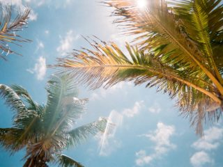 palm tree leaves flowing in the summer air