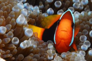 plongee snorkeling