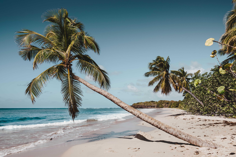 Préparer Voyage Martinique