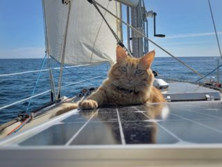 chat en bateau