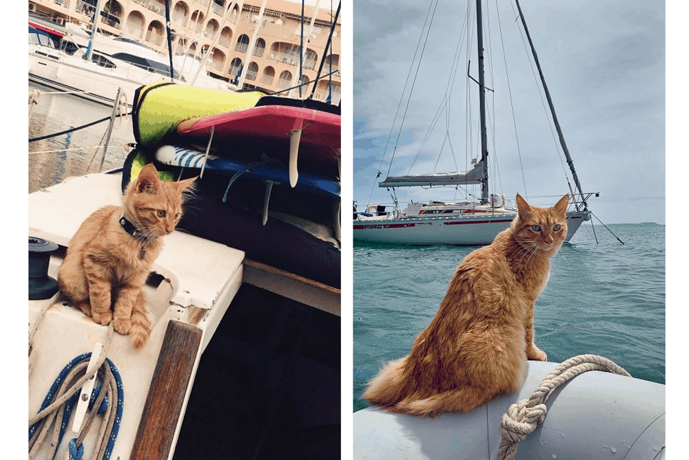 léon chaton en bateau